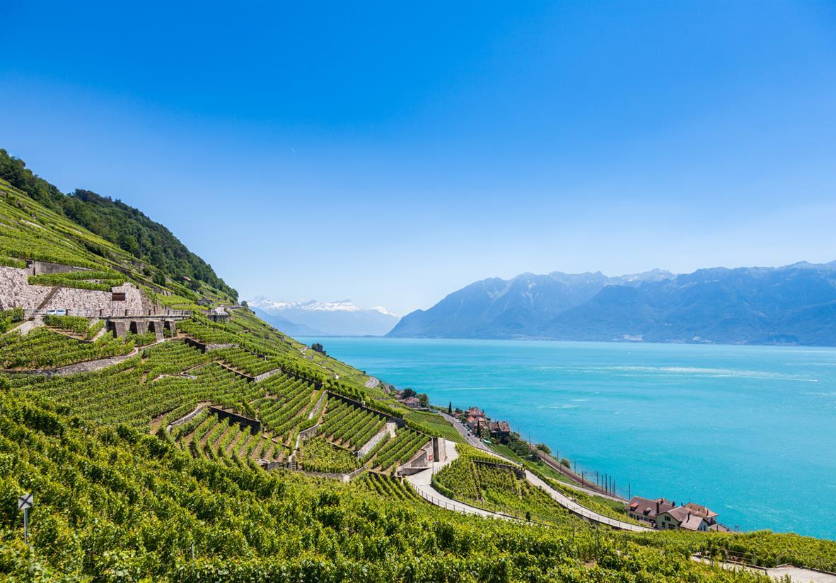 Terrasses de Lavaux above Lake Geneva