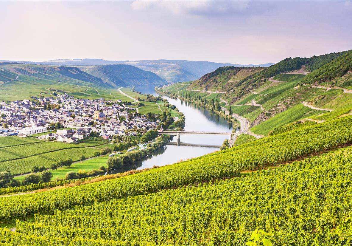 The sinuous Moselle flowing between vineyards