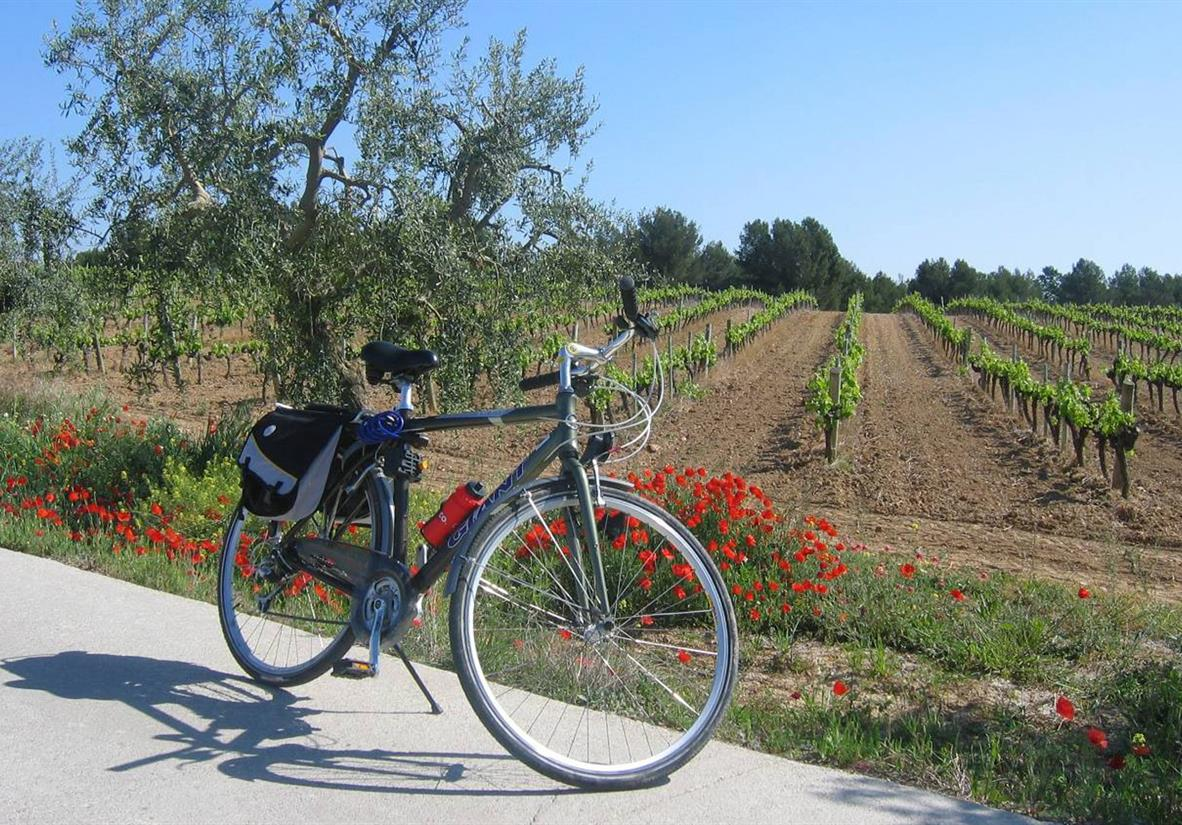 Enjoy rolling countryside cycling