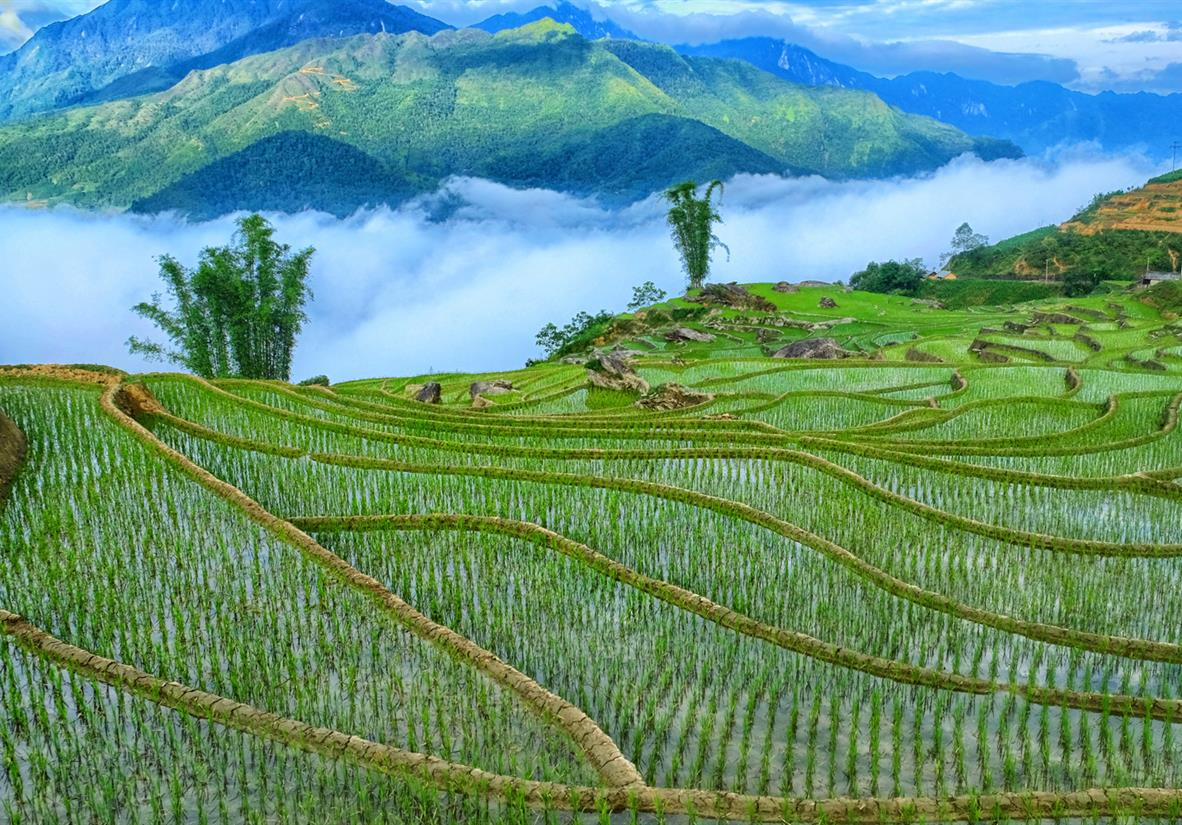 Hanoi, Sapa Valley Trek & Halong Bay