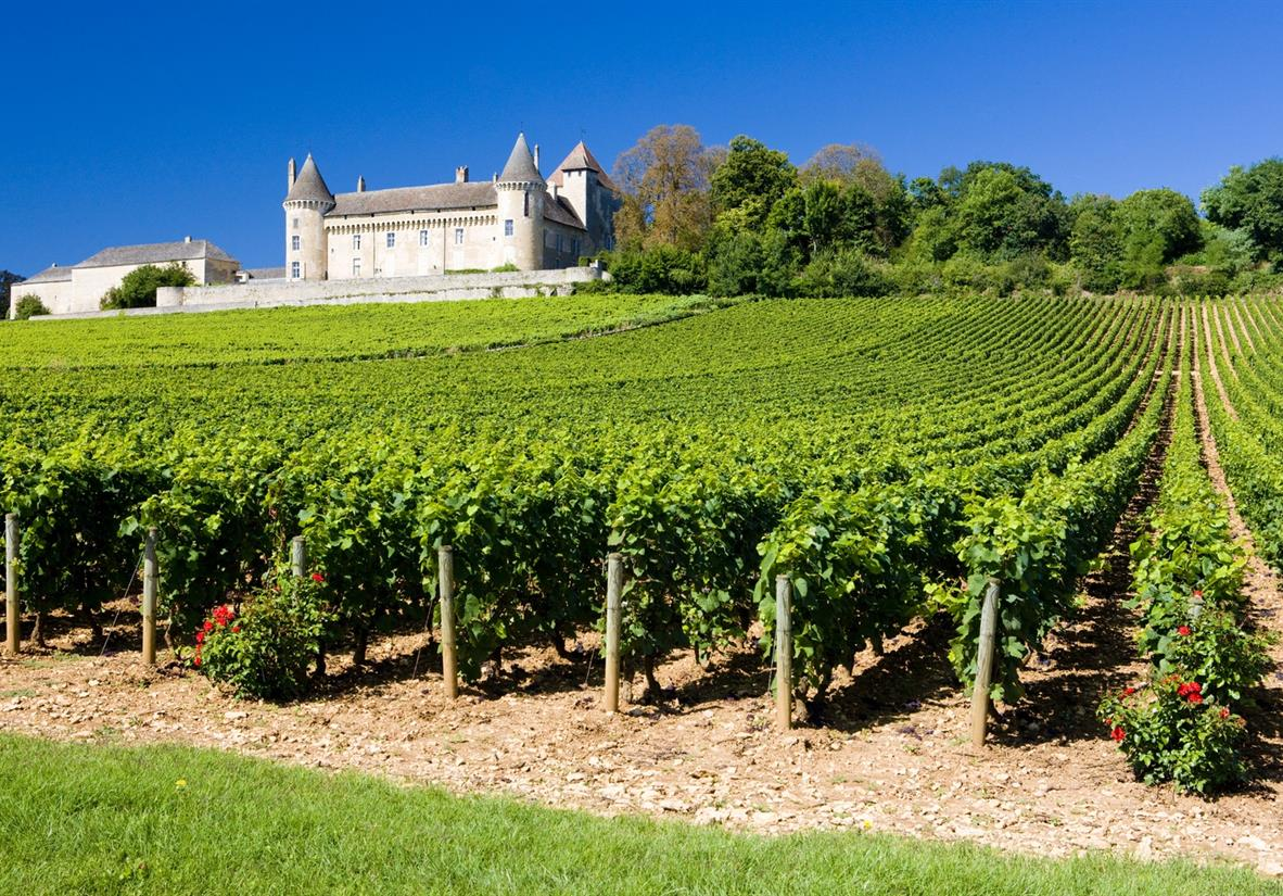 Clos de Vougeot vineyards