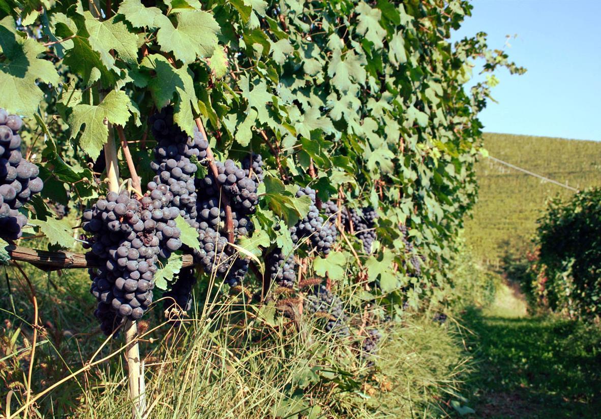 Kleine Auszeit in der Weinregion