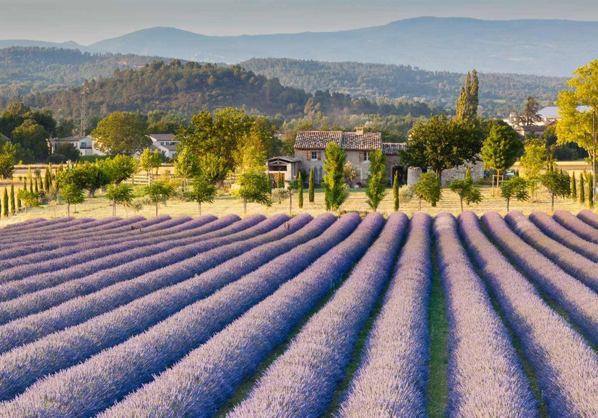 Classic sunflower and lavendar fields of Provence