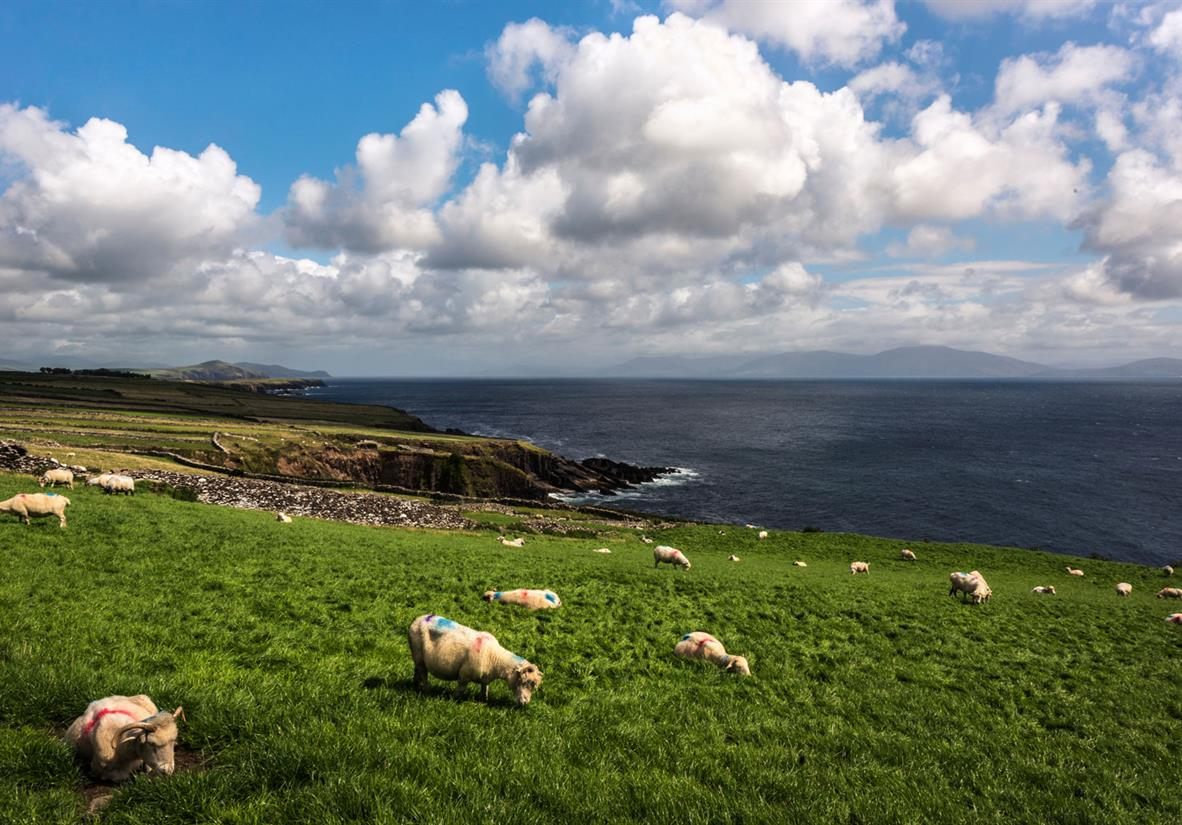 Sheep, beautiful cloud formations and views