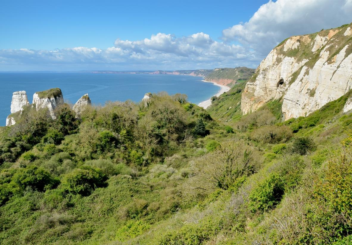 The Undercliff National Nature Reserve