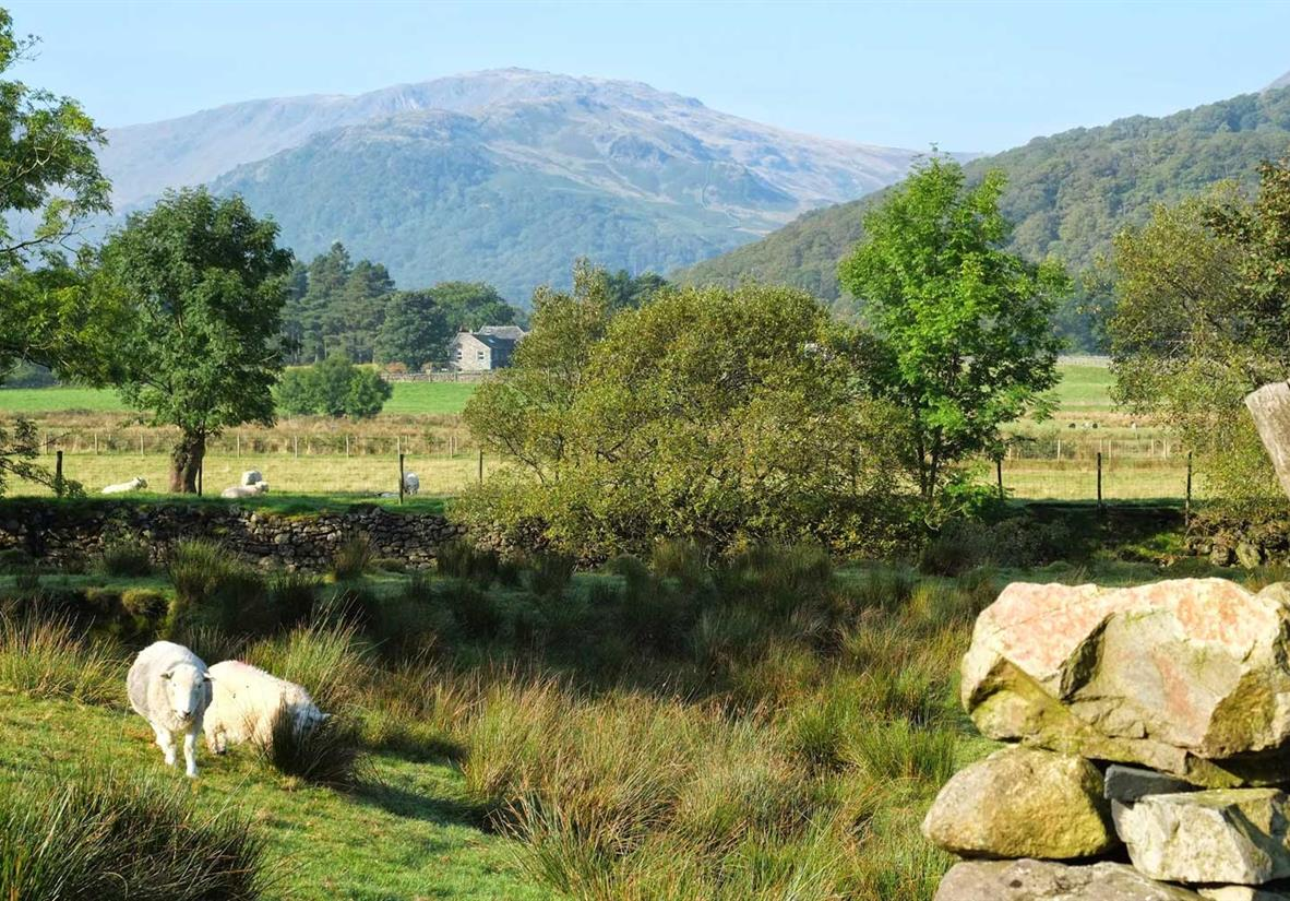 Walk through the green of the Yorkshire Dales