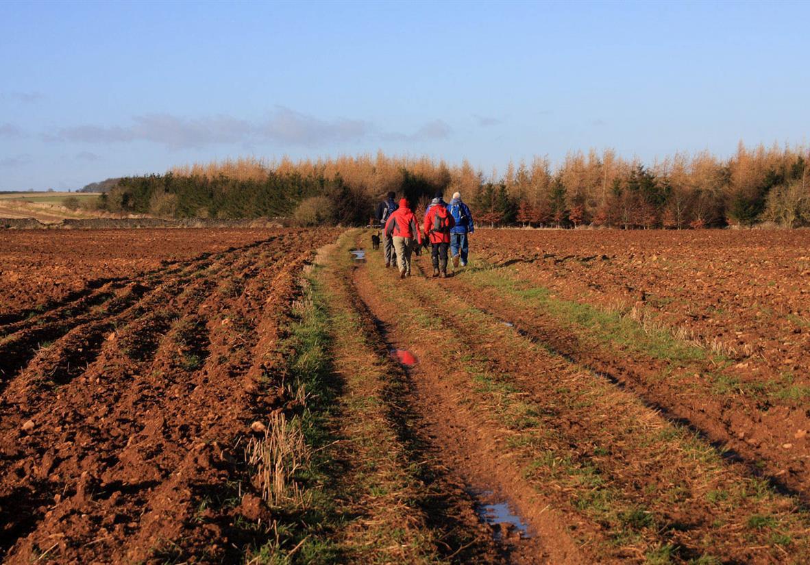 Walking through farmer's fields