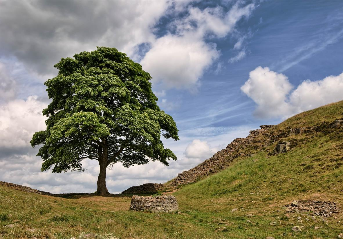 Sycamore Gap, famous for being in Robin Hood
