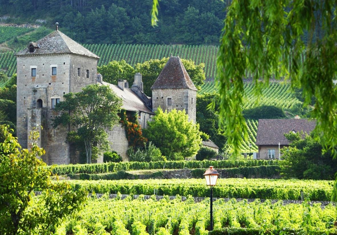 Weinbaugebiet von Gevrey-Chambertin