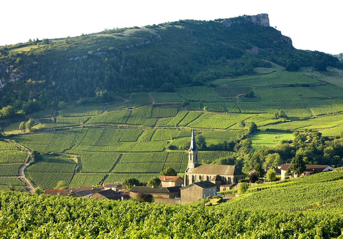 Weinparadies Burgund