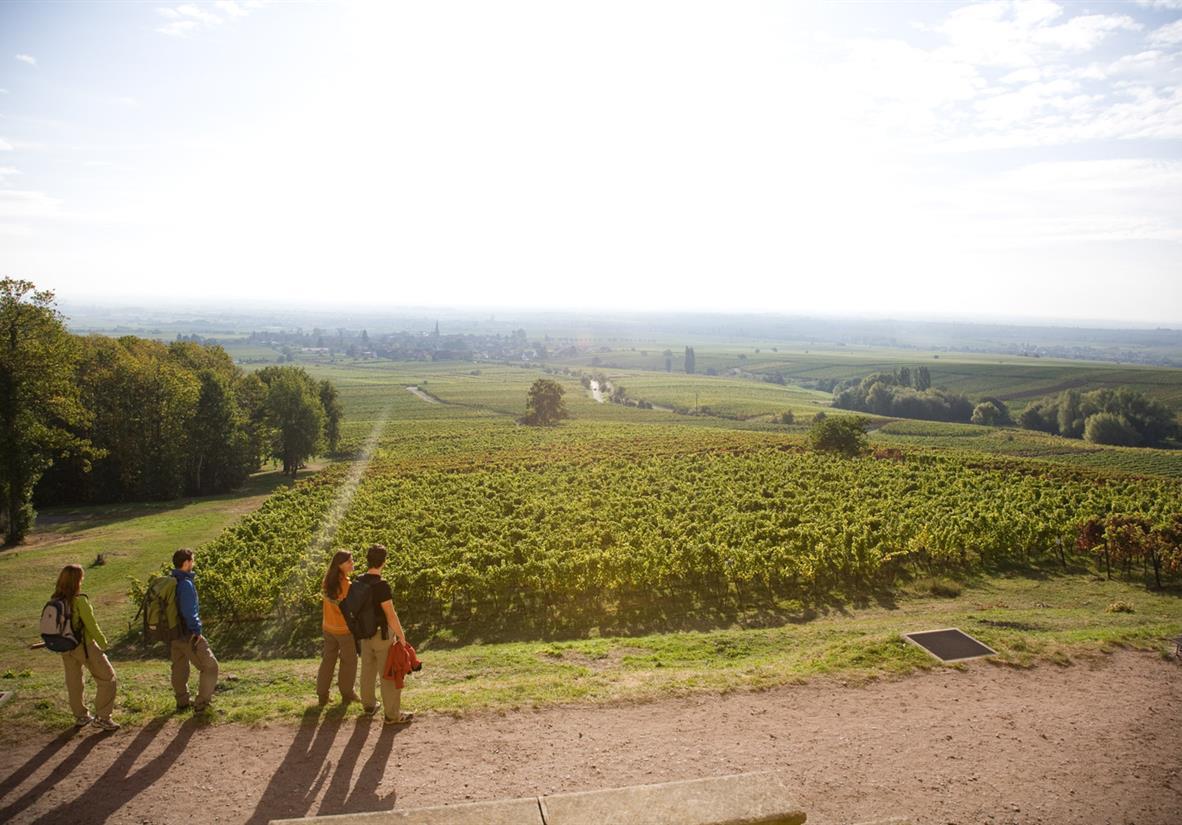 Pfälzer Weinsteig © Südliche Weinstrasse e.V.