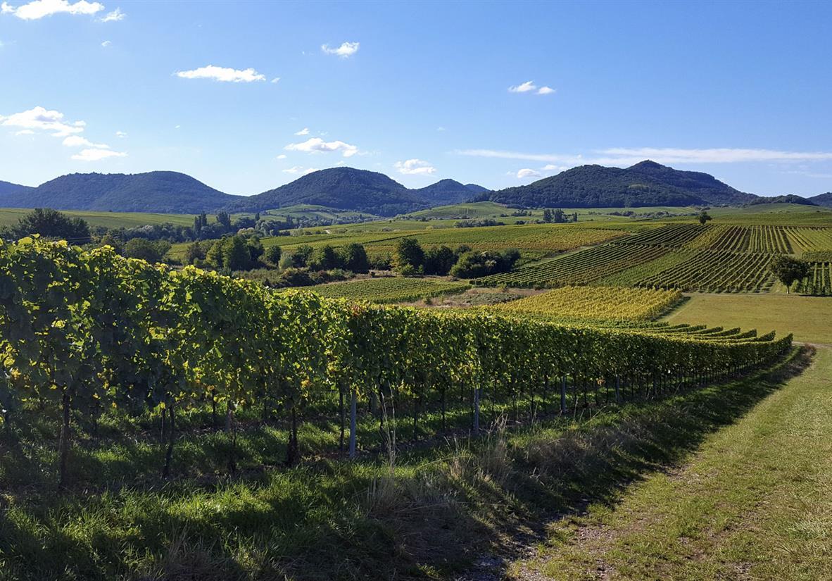Wanderreise ohne Gepäck auf dem Pfälzer Weinsteig