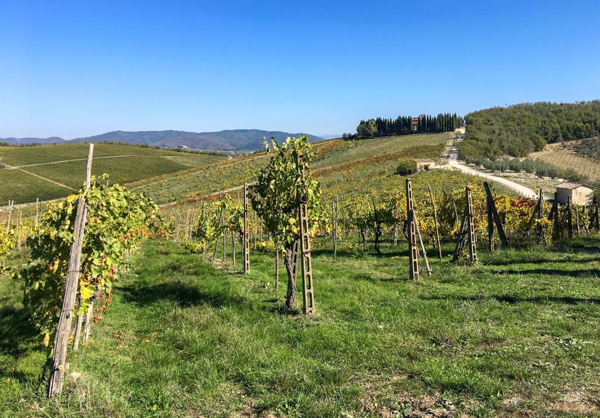 Wandern über Weinhügel