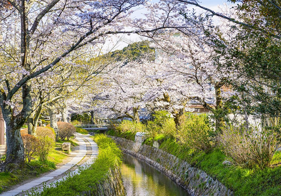 Spring is the best time to see the famous Blosssom