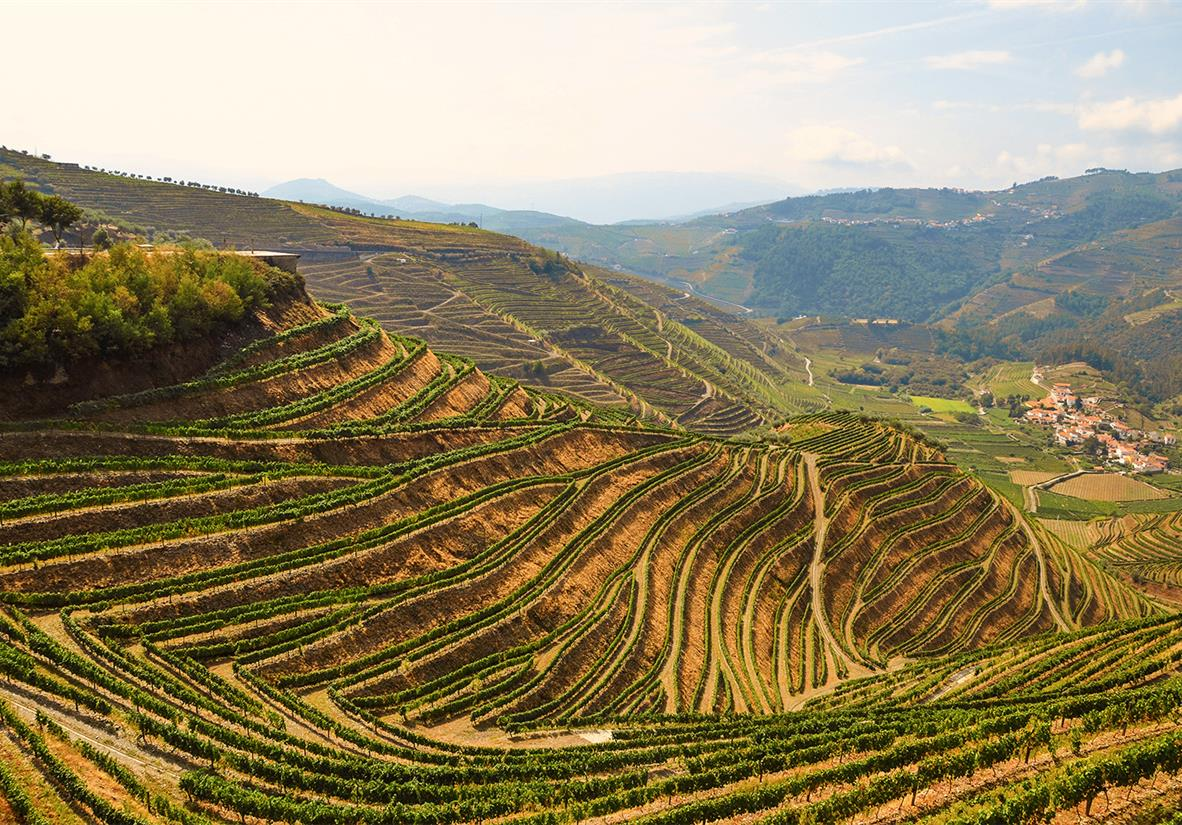 Walk the wine area of Porto and Douro Valley