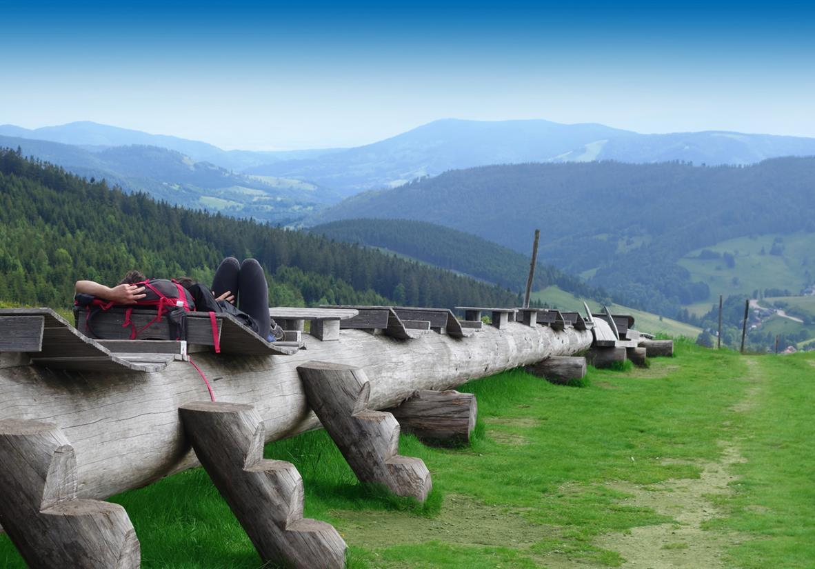 Die längste Baumliege der Welt