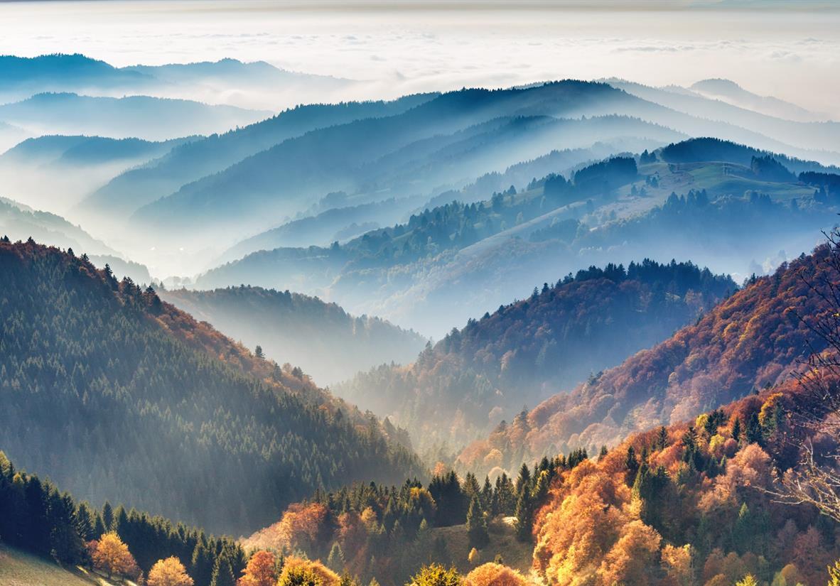 Der hügelige Schwarzwald bei Hinterzarten im Nebel