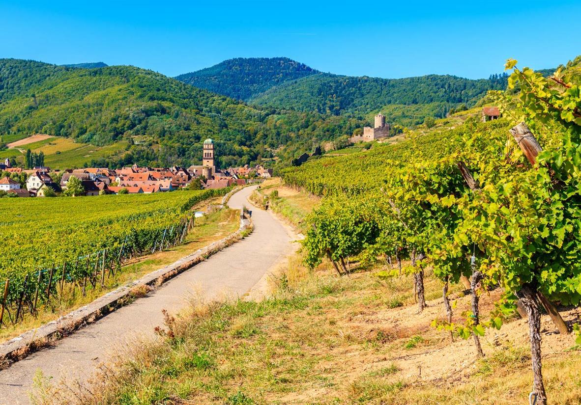 Weinpfad nach Kaysersberg und Burg im Hintergrund