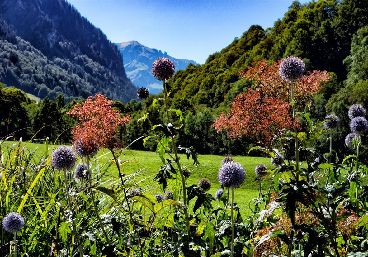 Flowers on the Via Alpina