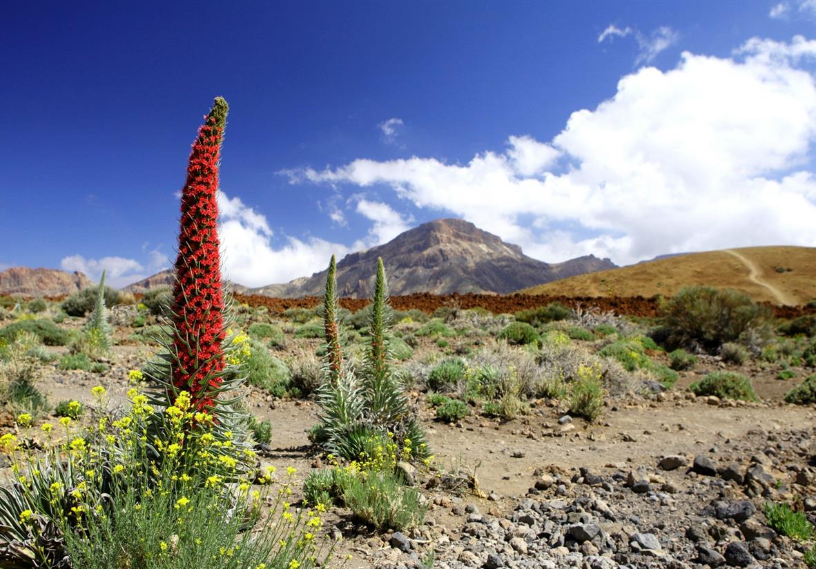 Self guided walking tour Mount Teide Short Break
