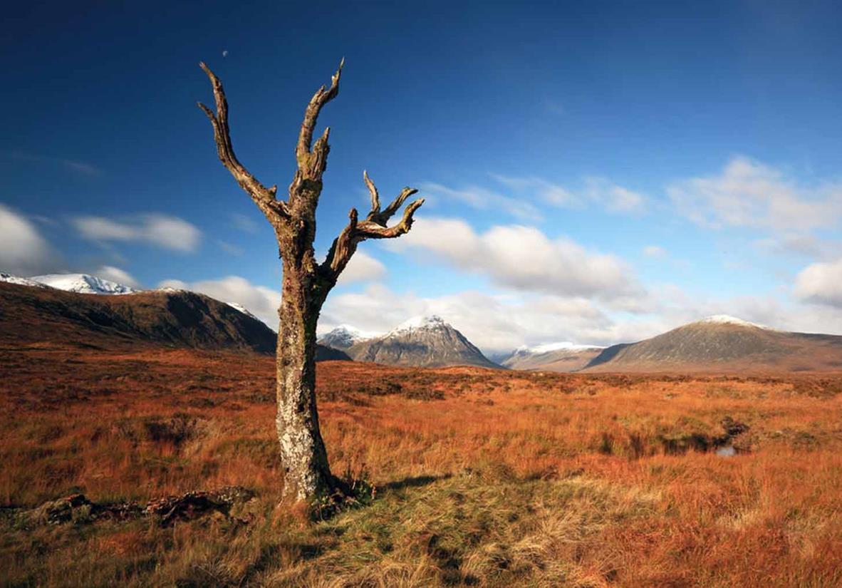 A lone tree on Rannoch Moor