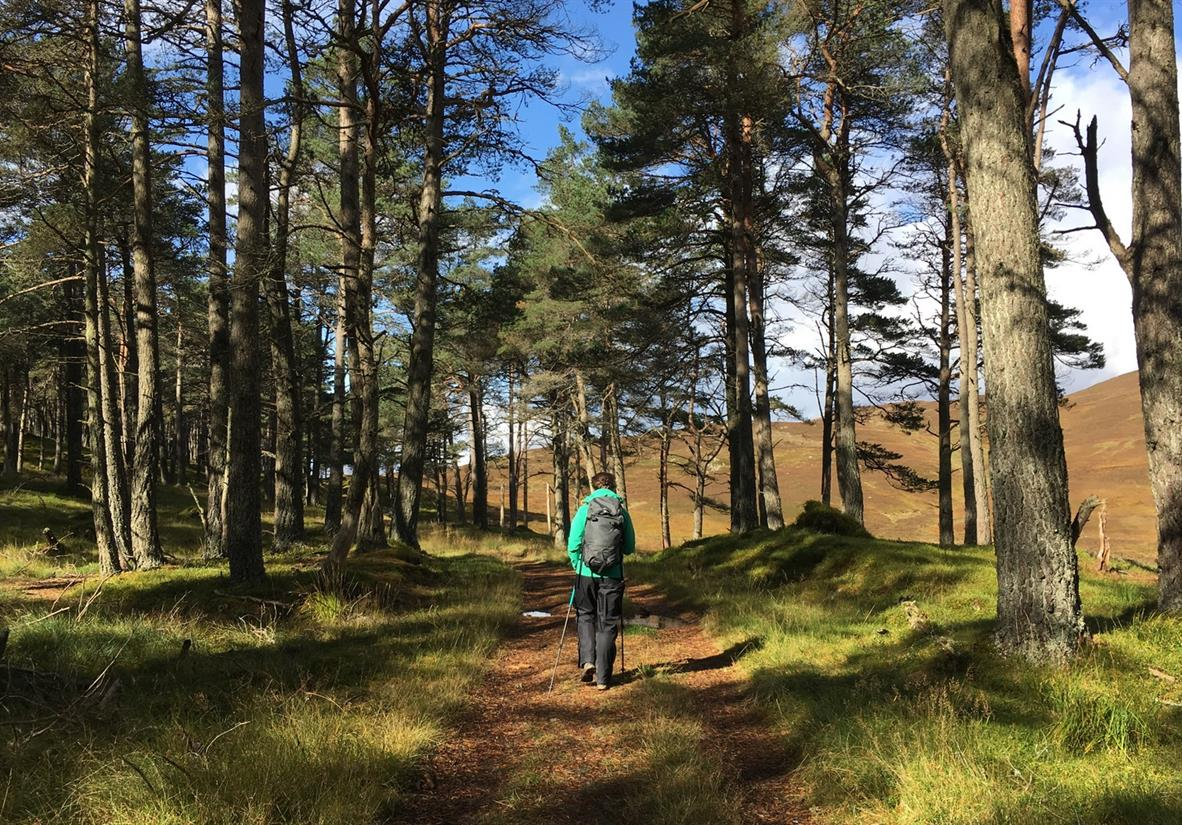 Discover the forest trails of Atholl Estates