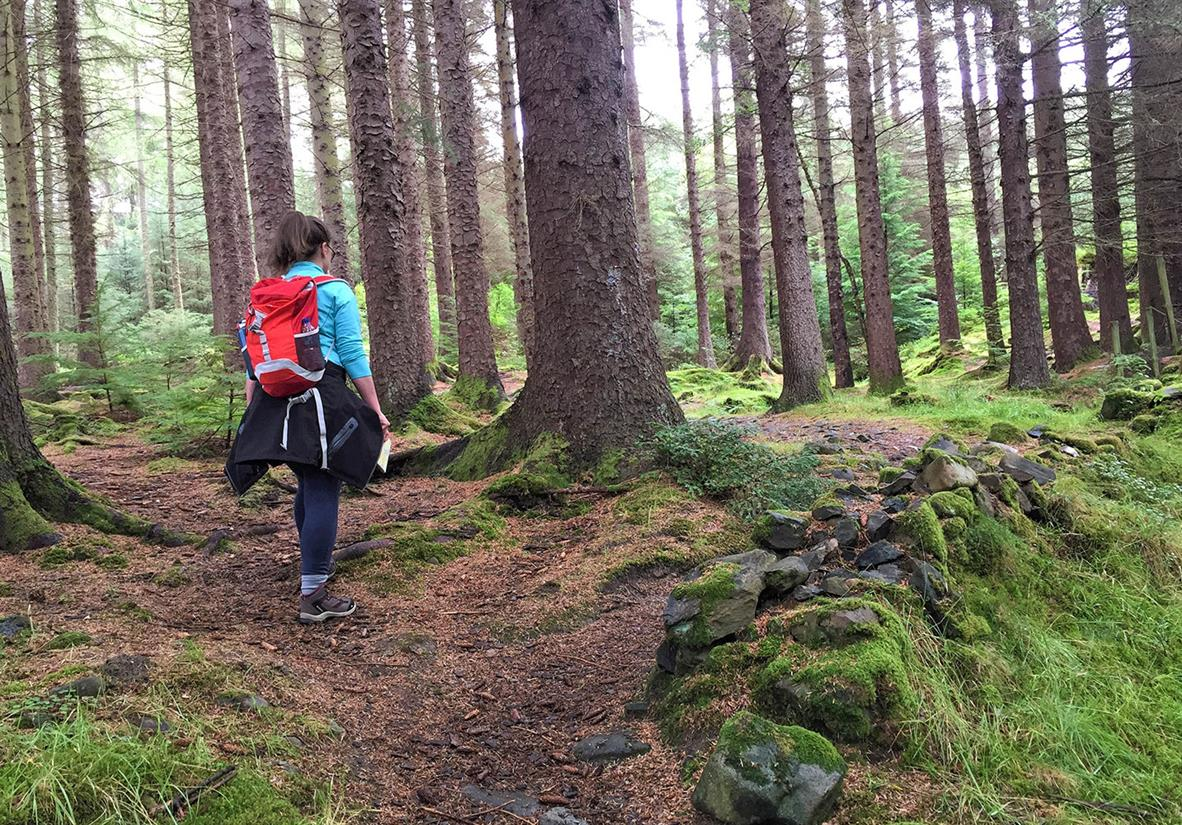 Lizzie in Craggan Forest en route to Killin
