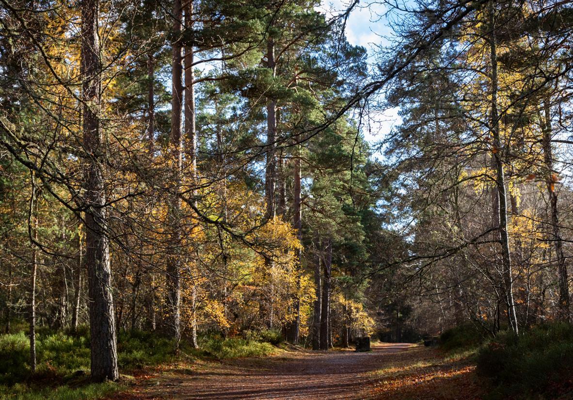 Wander the trail through Anagach Woodland