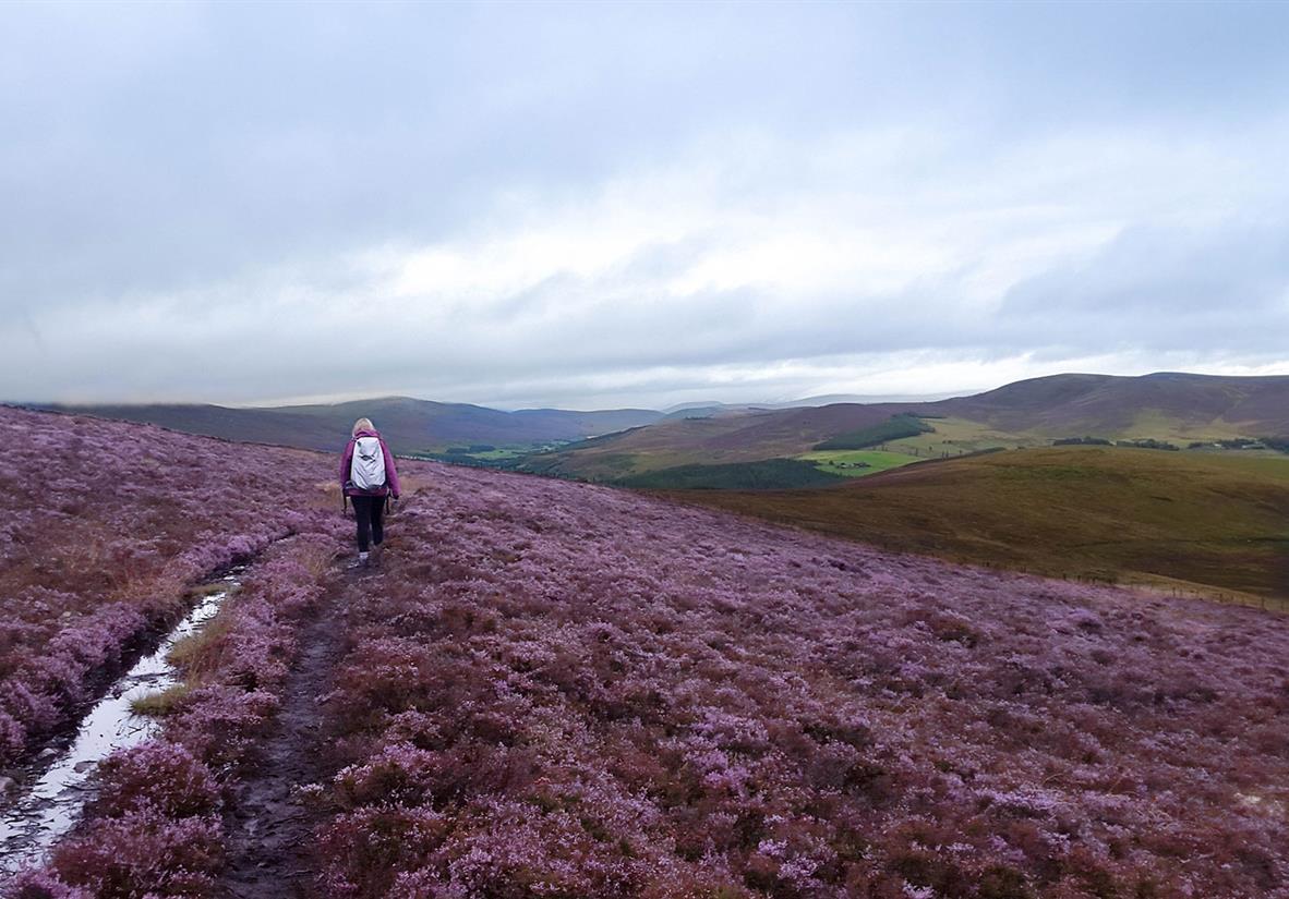 Wandern über sanfte, mit Heidekraut bewachse Hügel