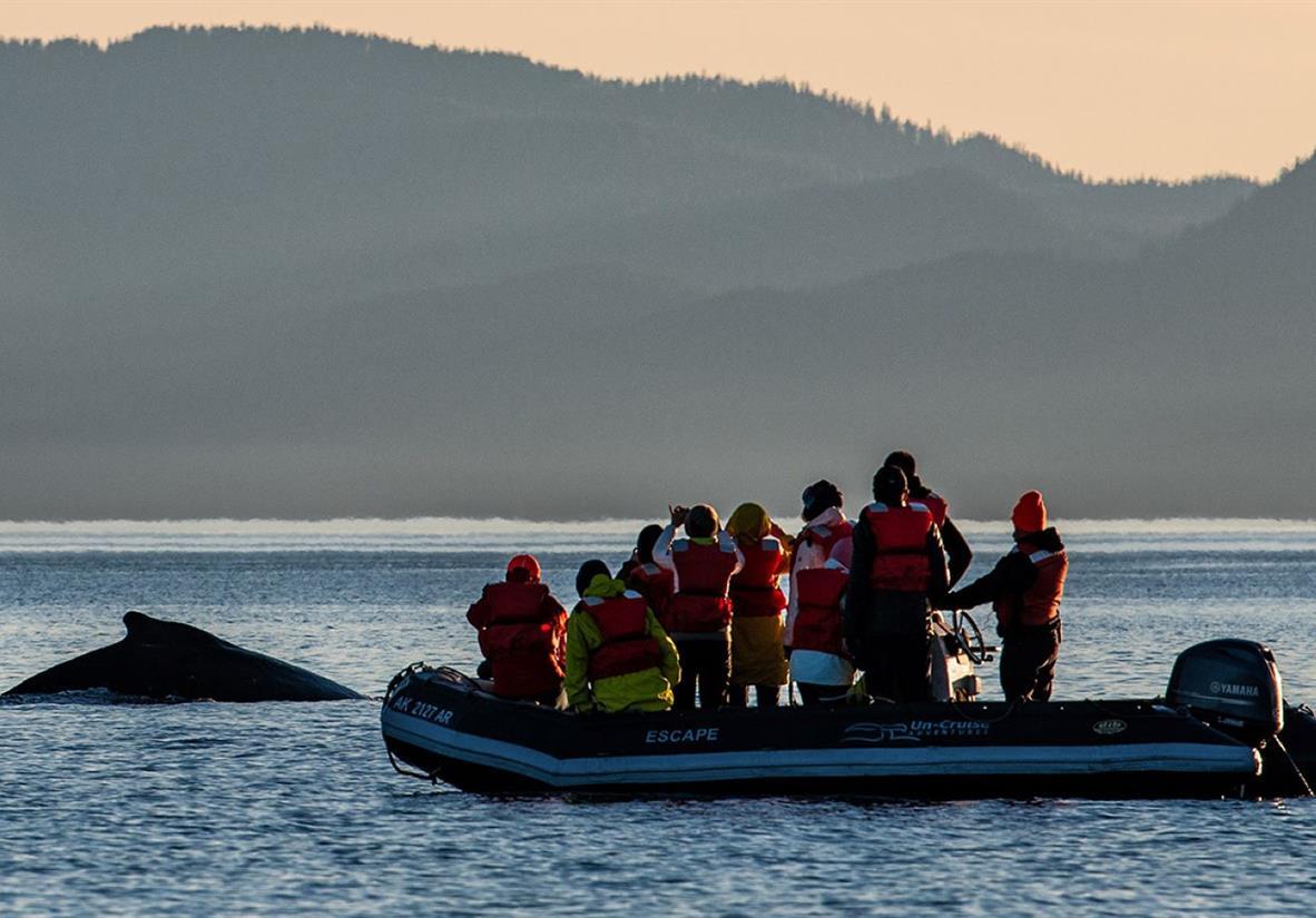 Whale watching in Alaska