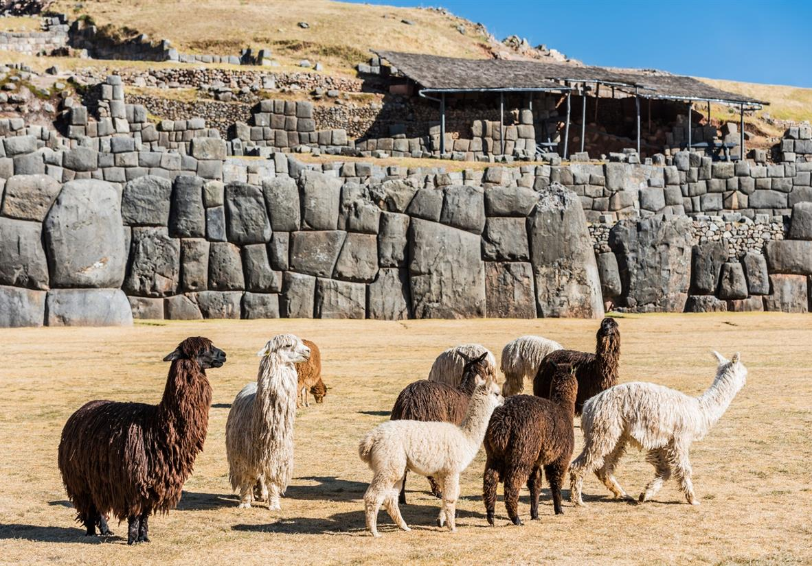 Llamas at the ancient Incan site of Sacsayhuaman