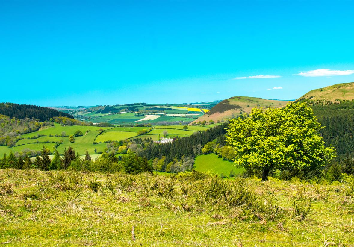 Hergest Ridge, Herefordshire