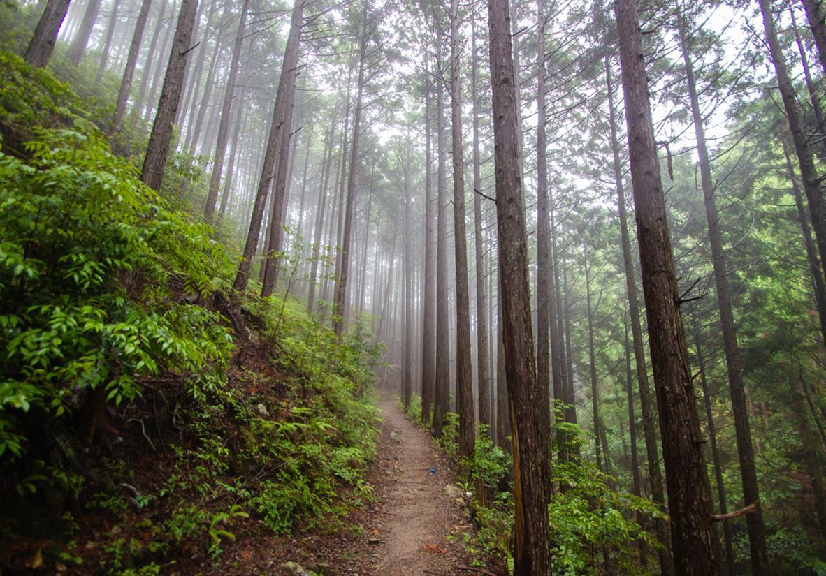 Walking through imposing trail with gigantic trees