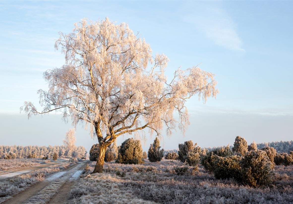 Winterzauber in der Heide ©Lüneburger Heide GmbH