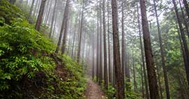 The Nakasendo Trail