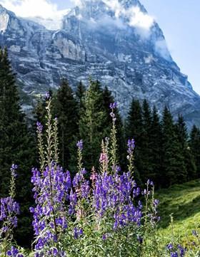 Alpine Crossings