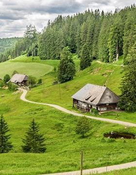 Black Forest Walking
