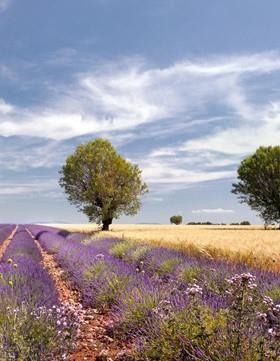Provence und Luberon