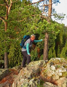 Schwarzwald & Schluchtensteig