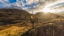 Wildlife on the West Highland Way
